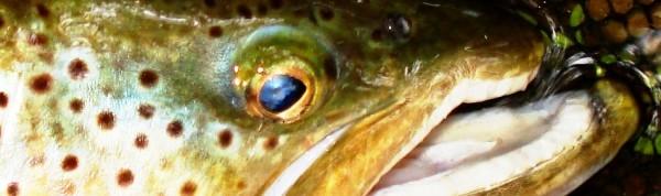 Les micro plombs peints ne plouquent pas , et n'effrayreront pas les beaux poissons...
