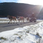 musher experience chiens