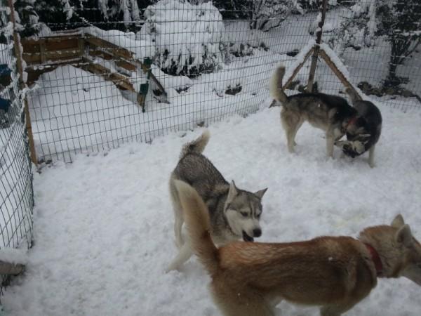 la meute de musher experience