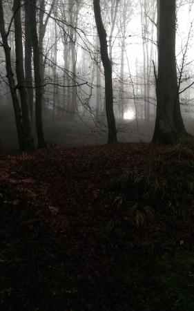 Le soleil se lève derrière la brume à Mullerthal