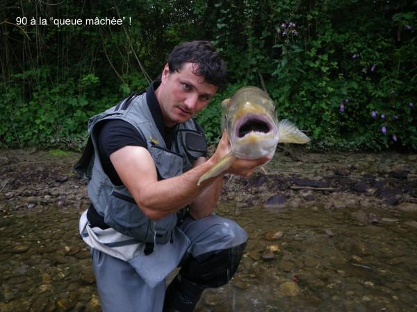 Truite lacustre Zanella pêche