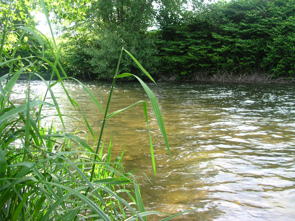 La-Fecht, la-rivière-de-mes-débuts
