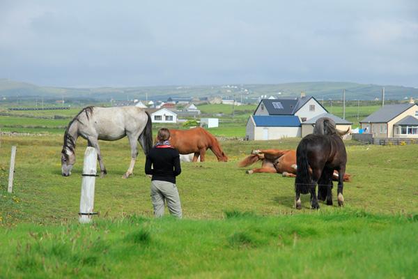 les-chevaux-en-Irlande
