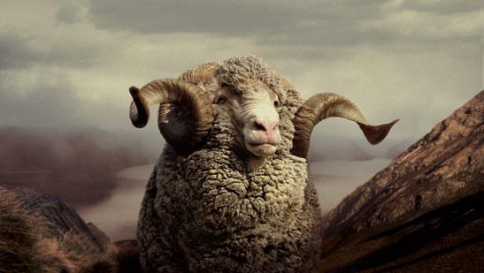 """Résultat de recherche d'images pour """"mouton de race mérinos"""""""