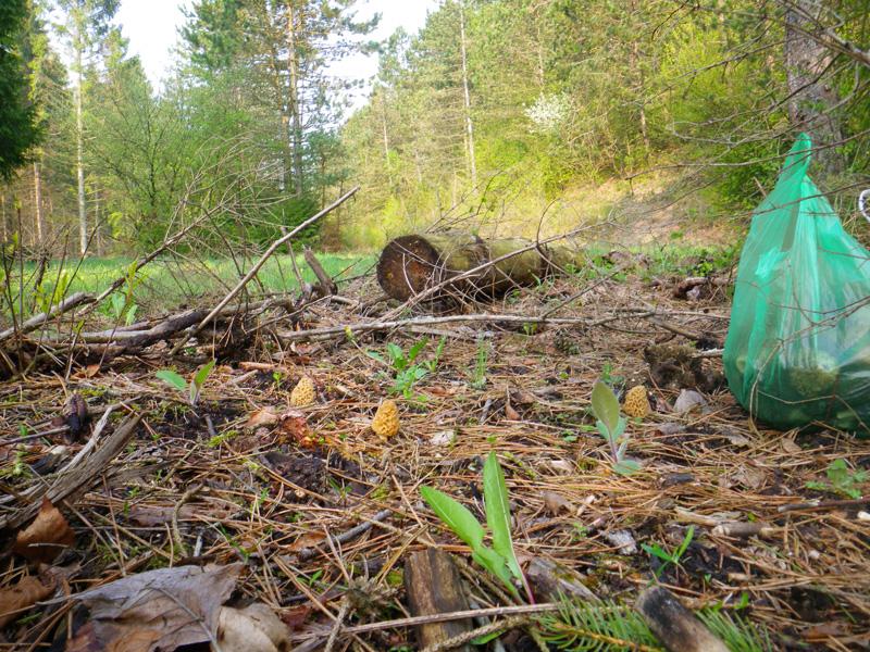 O trouver des morilles peche et sac a dos - Trouver des cagettes en bois ...
