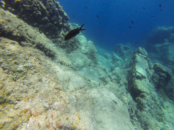 photo sous marine go pro black