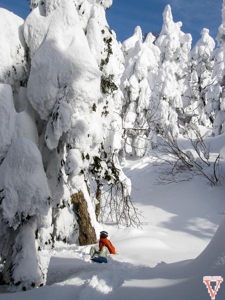 Snow au milieu des arbres à Zao Onsen