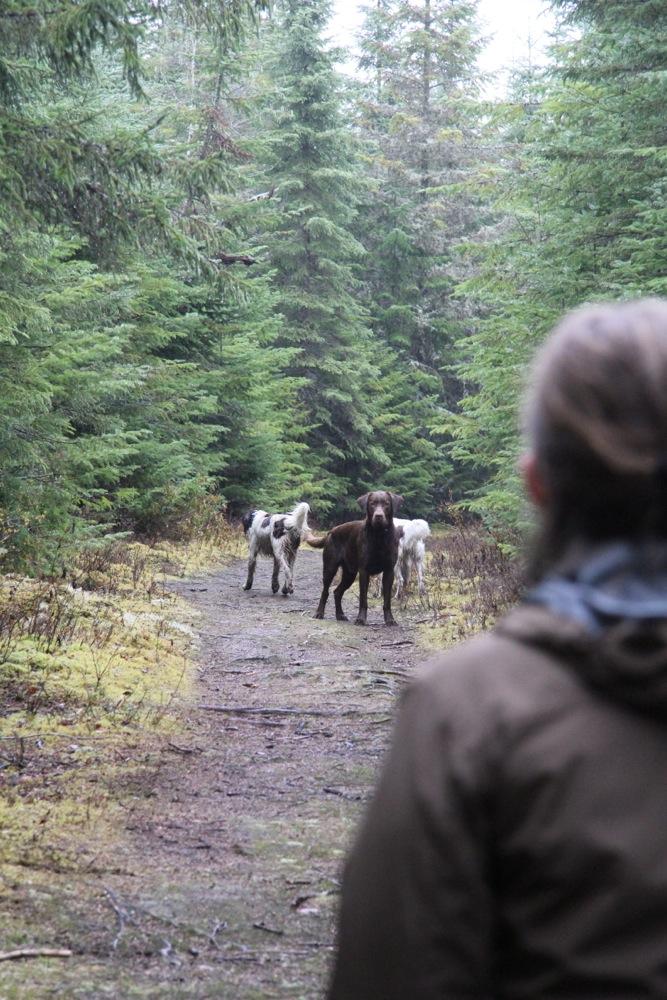Les chiens sont chez eux et partage les sorties avec les randonneurs