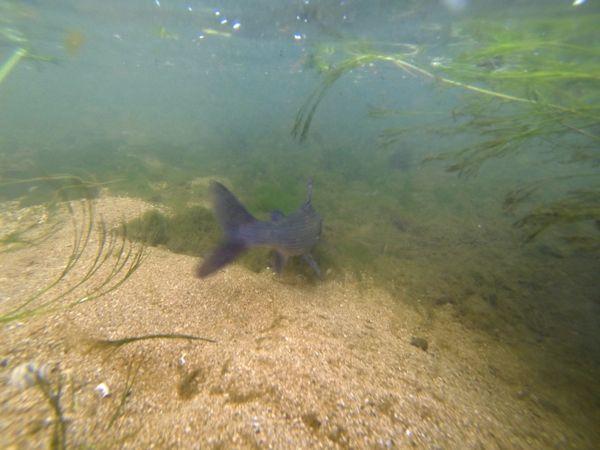 Les poissons retrouvent toujours leur liberté