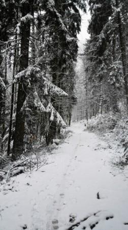 Début du parcours pour le Mont St Odile