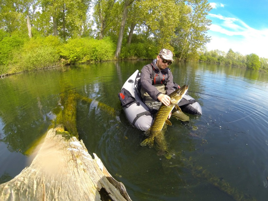 Gros brochet en Float tube