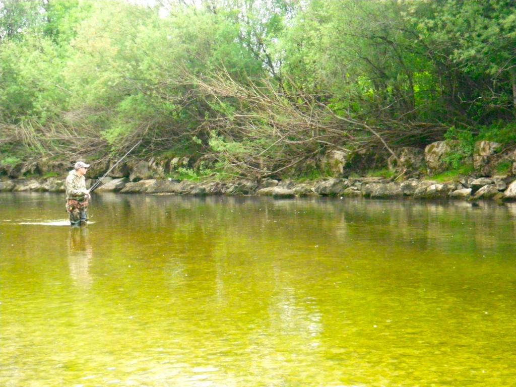 Nymphe à vue sur la Haute rivière d'Ain